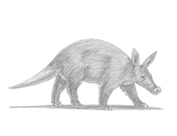 How to Draw an Aardvark Walking
