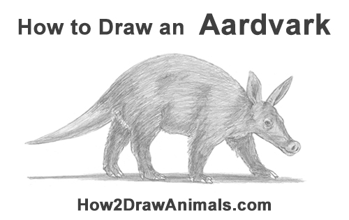 How to Draw an Aardvark Anteater Walking