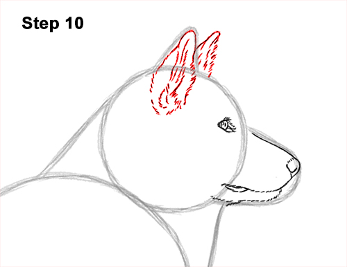 How to Draw an Alaskan Malamute Puppy Dog Side View 10