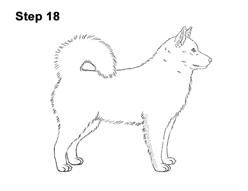 How to Draw an Alaskan Malamute Puppy Dog Side View 18