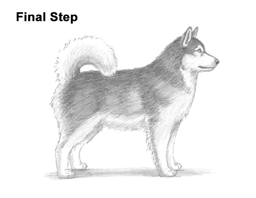 How to Draw an Alaskan Malamute Puppy Dog Side View