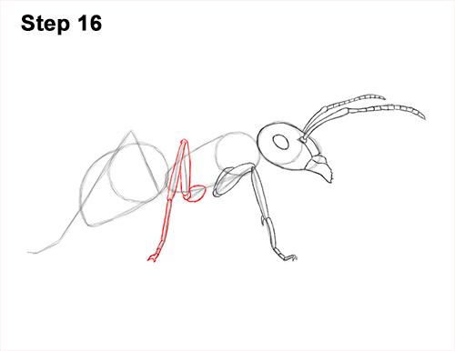How to Draw Carpenter Pavement House Ant Insect Bug 16