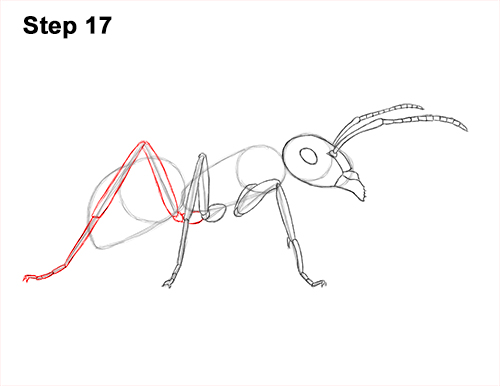 How to Draw Carpenter Pavement House Ant Insect Bug 17