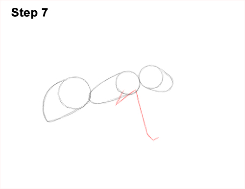 How to Draw Carpenter Pavement House Ant Insect Bug 7