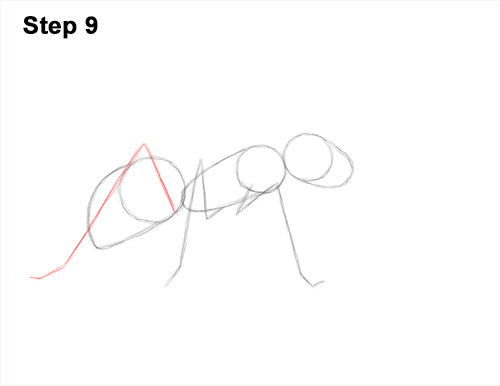 How to Draw Carpenter Pavement House Ant Insect Bug 9