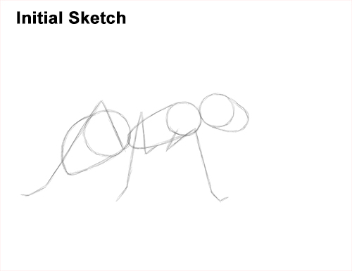 How to Draw Carpenter Pavement House Ant Insect Bug Guidelines