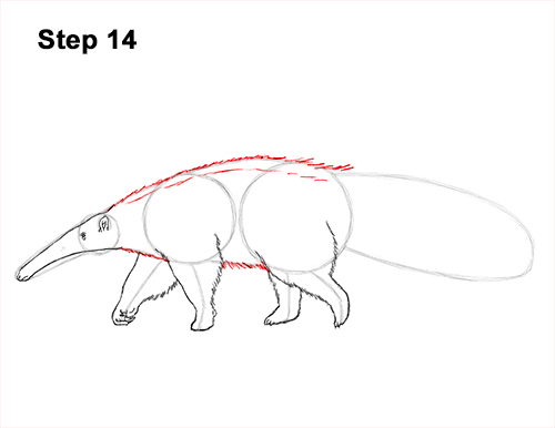 Draw Giant Anteater 14