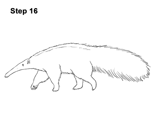 Draw Giant Anteater 16