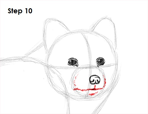 Draw Arctic Fox 10