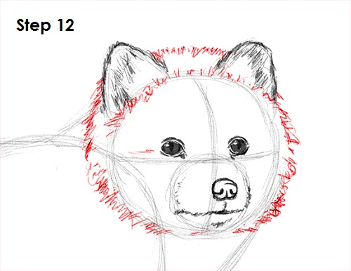 Draw Arctic Fox 12