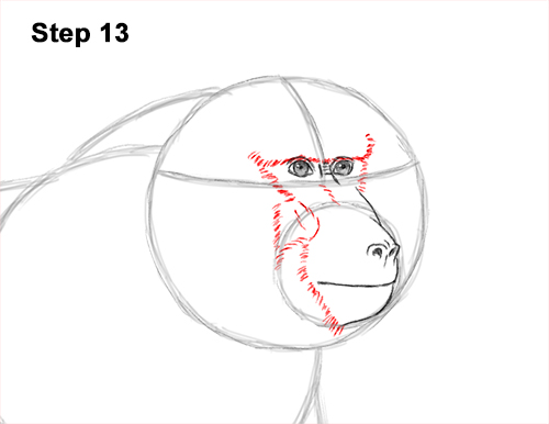 How to Draw an Olive Chacma Baboon Monkey Walking 13