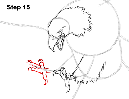 How to Draw Bald Eagle Hunting Swooping Wings 15