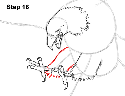 How to Draw Bald Eagle Hunting Swooping Wings 16