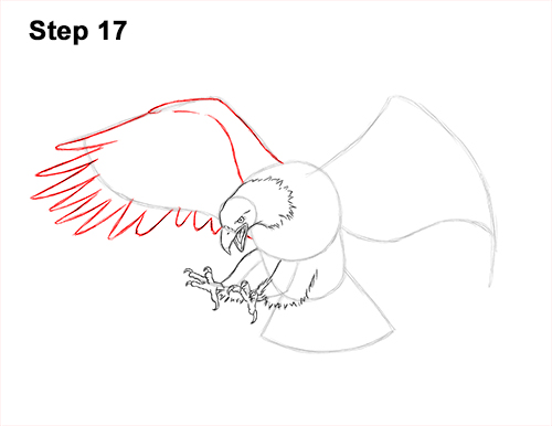 How to Draw Bald Eagle Hunting Swooping Wings 17