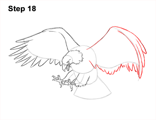 How to Draw Bald Eagle Hunting Swooping Wings 18