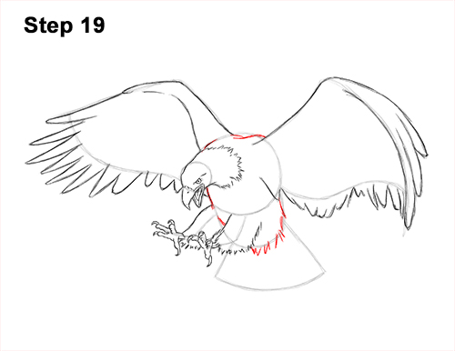 How to Draw Bald Eagle Hunting Swooping Wings 19