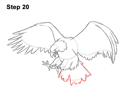 How to Draw Bald Eagle Hunting Swooping Wings 20