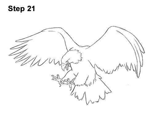 How to Draw Bald Eagle Hunting Swooping Wings 21