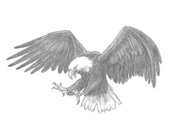 How to Draw a Bald Eagle Fishing Hunting Flying