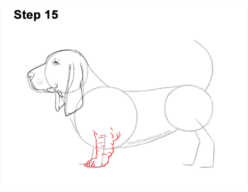 How to Draw a Basset Hound Puppy Dog Side View 15