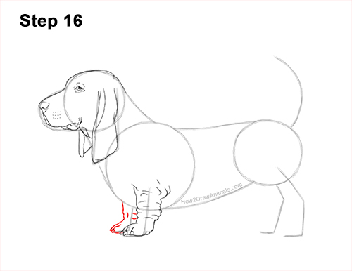 How to Draw a Basset Hound Puppy Dog Side View 16