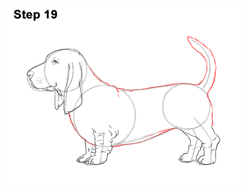 How to Draw a Basset Hound Puppy Dog Side View 19