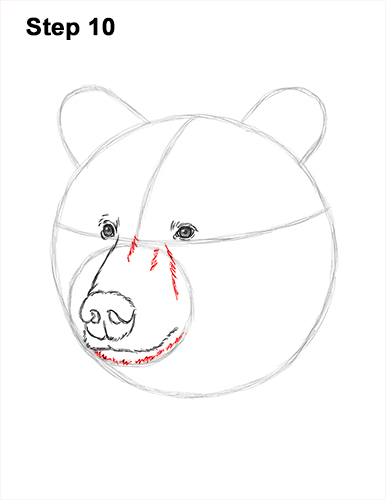 How to Draw a Grizzly Brown Bear Head Portrait 10