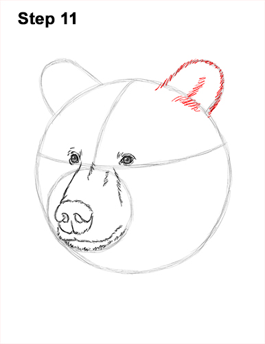 How to Draw a Grizzly Brown Bear Head Portrait 11