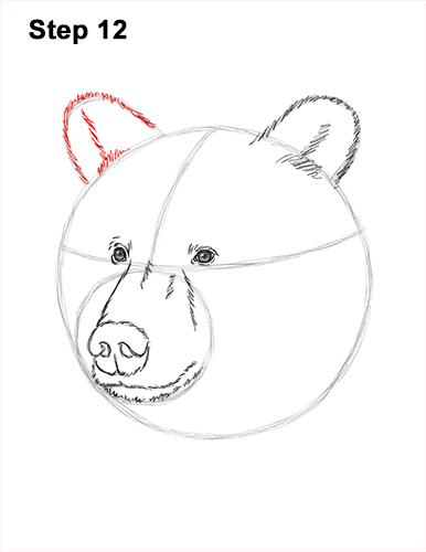 How to Draw a Grizzly Brown Bear Head Portrait 12