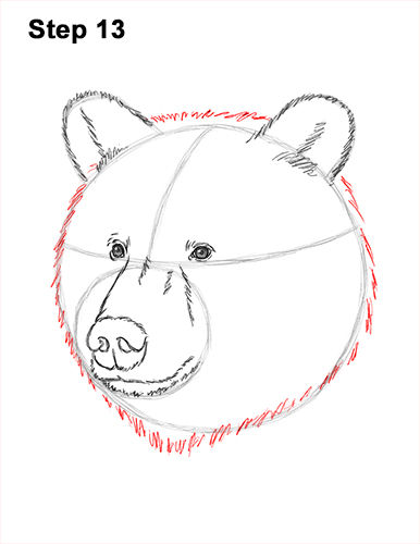 How to Draw a Grizzly Brown Bear Head Portrait 13