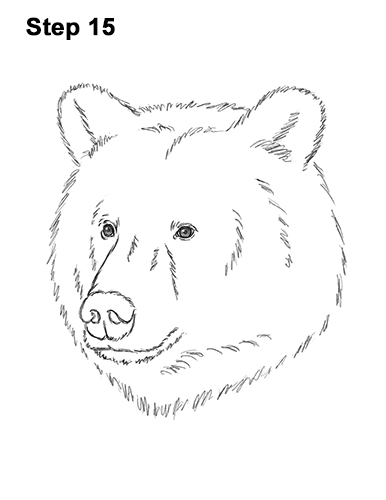 How to Draw a Grizzly Brown Bear Head Portrait 15