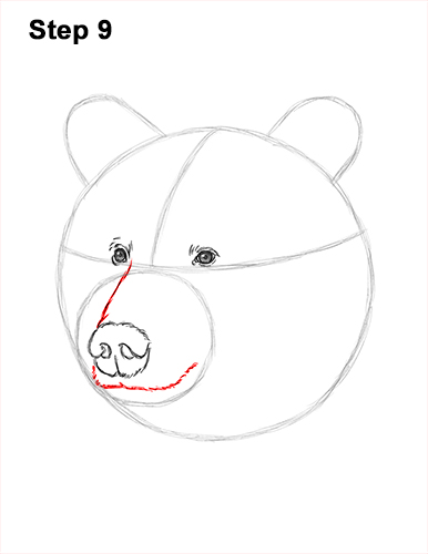 How to Draw a Grizzly Brown Bear Head Portrait 9