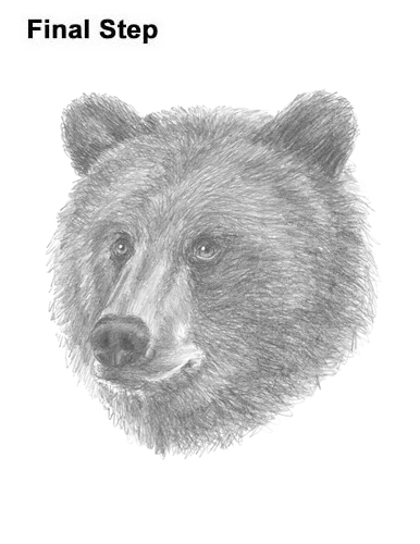 How to Draw a Grizzly Brown Bear Head Portrait