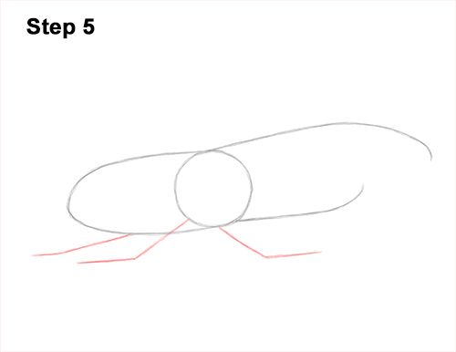 How to Draw a Hercules Rhino Beetle Bug 5