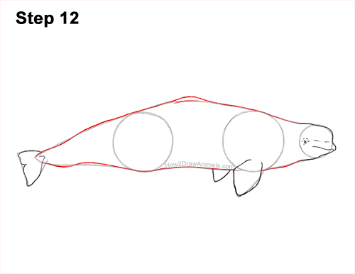 How to Draw a Beluga White Whale 12
