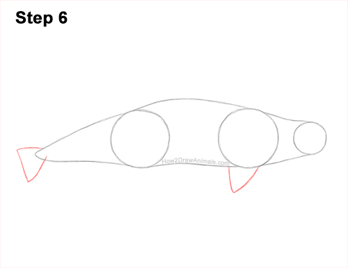 How to Draw a Beluga White Whale 6