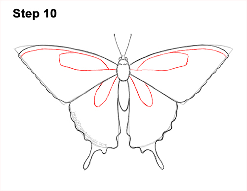 How to Draw a Yellow Eastern Tiger Swallowtail Butterfly 10