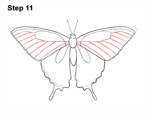 How to Draw a Yellow Eastern Tiger Swallowtail Butterfly 11