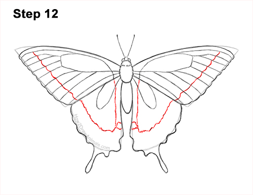 How to Draw a Yellow Eastern Tiger Swallowtail Butterfly 12