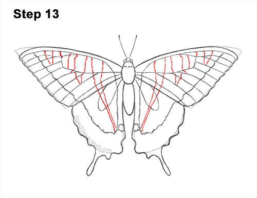 How to Draw a Yellow Eastern Tiger Swallowtail Butterfly 13