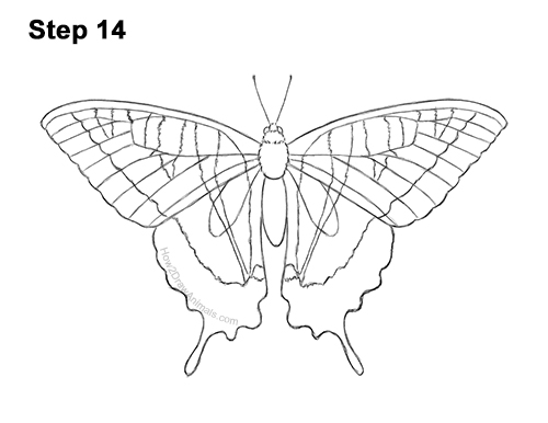 How to Draw a Yellow Eastern Tiger Swallowtail Butterfly 14