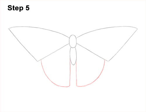 How to Draw a Yellow Eastern Tiger Swallowtail Butterfly 5