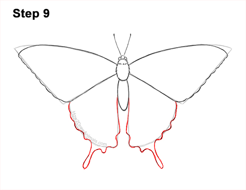 How to Draw a Yellow Eastern Tiger Swallowtail Butterfly 9