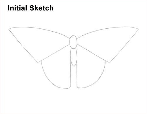 How to Draw a Yellow Eastern Tiger Swallowtail Butterfly Guides Lines