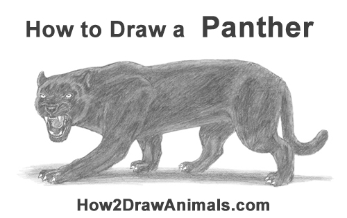 How to Draw an Angry Black Panther Roaring