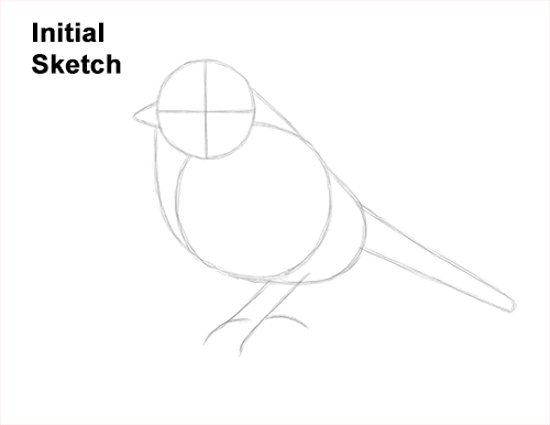 How to Draw a Eurasian Blue Tit Bird Guides Lines