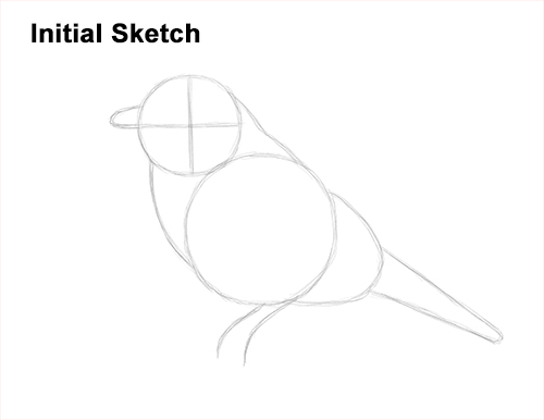 How to Draw Eastern Western Bluebird Bird Guide Lines
