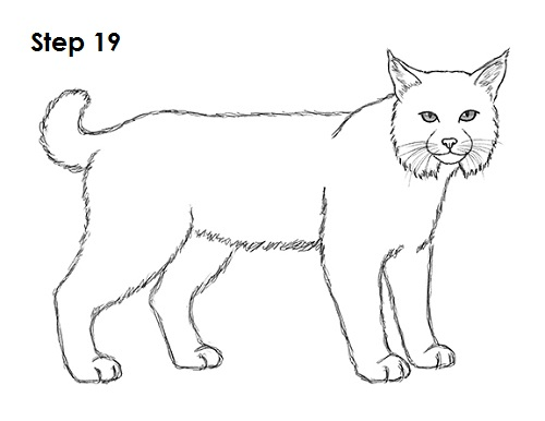 Draw Bobcat 19