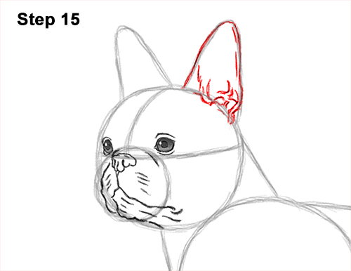How to Draw a Boston Terrier Puppy Dog 15