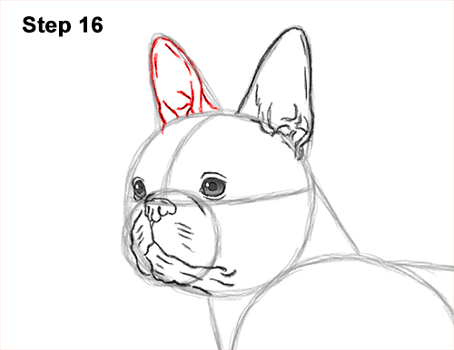 How to Draw a Boston Terrier Puppy Dog 16